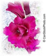 Stock image of Gladiolus Under Rain - Gladiolus from Latin,...