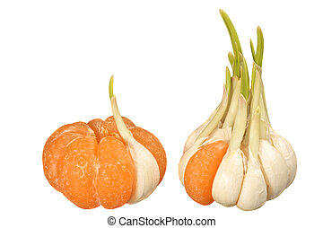 Similarity and dissimilarity - Mandarin with one garlic...