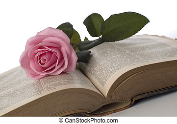 rose - pink rose on a book close up shoot