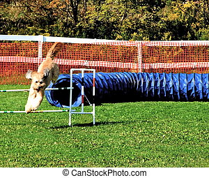 Dog Agility Trials - Dog agility trials at a fall fair