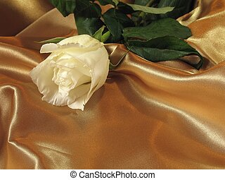 Rose on gold satin - A delicate white rose on a loosely laid...