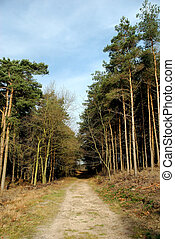 Forrest path with blue sky - Forrest path with blue sky on...