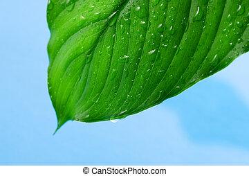 綠色, 葉子