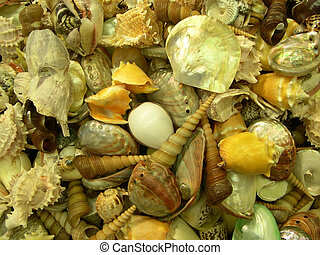 White sea shells - Dried white sea shellfishes which live in...