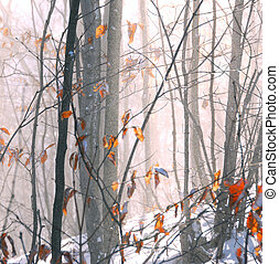 Winter forest with snow dust blowing across