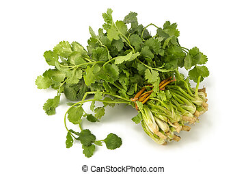 Juicy fragrant coriander. Irreplaceable seasoning for...
