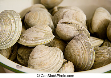 Clams in a Bowl - Steamed Clams in a Bowl Ready to Eat