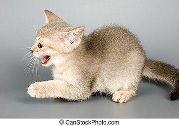 quién, posturas, tiempo, primero, gatito