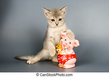 Kitten with a coin box in the form of a pig in studio