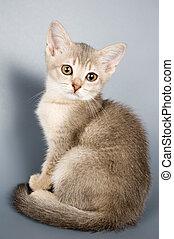gatito, quién, primero, tiempo, posturas
