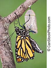 monarca, el emerger