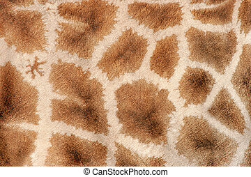 Giraffe skin - Close-up view of the skin of a giraffe...