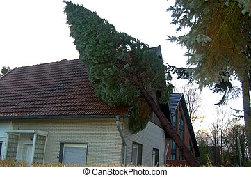 Tree in House - Tree after Storm in House