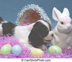 puppy and bunny