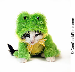 Frog Cat - Kitten in a frog costume