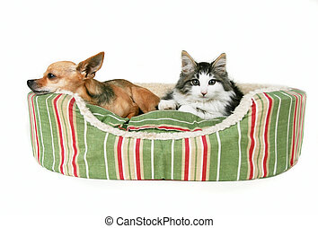 Resting Enemies - A dog and kitten in a pet bed