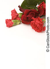 Red rose & Carnation - A red Rose and carnation against a...