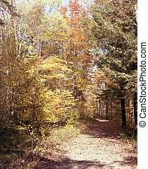 Quiet Woods - This is a fall scene in the Haliburton,...