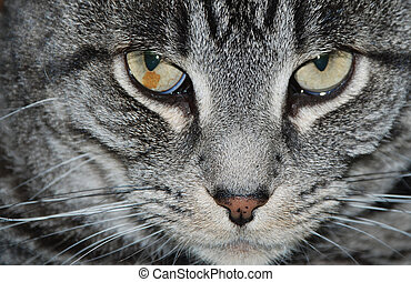 Be Very Careful - A dangerous look from a cat that says:...
