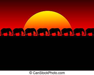 foolish sunset - sunset and elephant