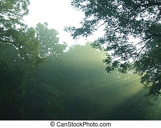 mist in the trees - early morning eerie mist in the trees