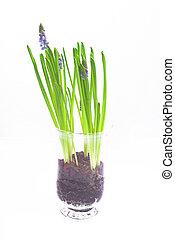 flower - glass; white; background; green; plant; flower;...
