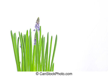 flower - glass; white; background; green; plant; flower;...