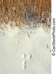 Rabbit Tracks - rabbit tracks in snow; Homestead National...