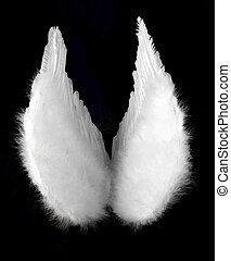 Angel Wings Isolated on Black Top View - Angel Wings...