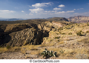 Canyon and Prickly Pear Cactus - Prickly Pear Cactus above...