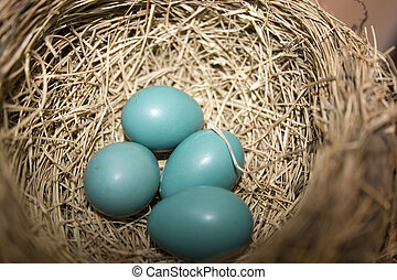 Robbin Eggs - four little robbin eggs in a nest