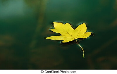 Autumn leaf - Yellow autumn leaf on the water