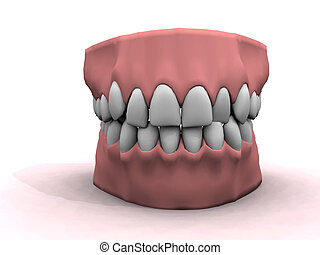 good teeth - teeth model showing good oral hygiene