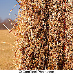 hayfield - closeup of a hay roll
