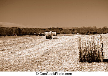 hayfield in sepia tones
