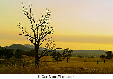 Australian dry landscape - A dead tree remains in a dry...