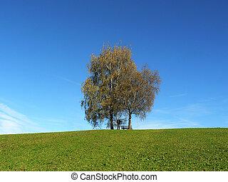 Birches in a field in autumn