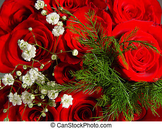 Closeup of a Dozen Roses - Macro image of a dozen red rozes...