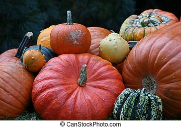 pumkins - Some very beautiful colored pumpkins