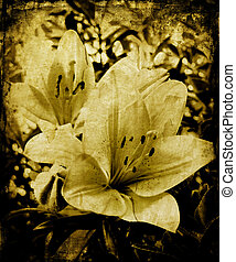 Grunge lillies - Lillies on grunge background