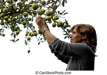 Girl picking an apple on white - Beautiful girl picking an...