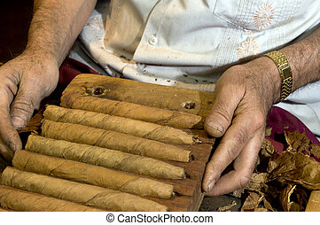 hand made cigars - man making holding handmade freshly...