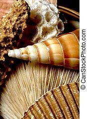 Collage of Sea Shells, Sealife