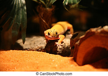Leopard Gecko Mamal - Leopeard Gecko in Contained Substrate