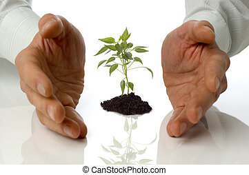 plant - business men holding a plant between hands on white