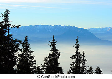 Fir trees over a foggy valley and a mountain ridge