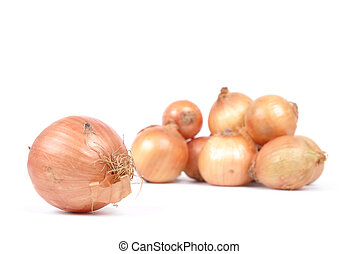Onion vegetables over white background