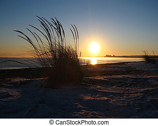 winter beach weeds - Weeds in the sand, popping out of the...