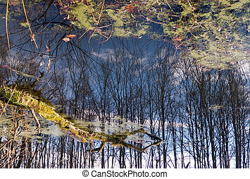 Fantasy of reflection 2 - reverse 180 degree rotate water...