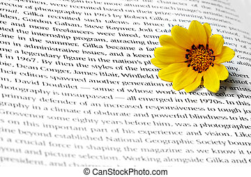 Flower on Text - Yellow daisy on white page of text